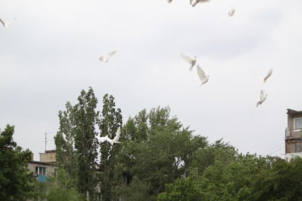 Летите голуби... летите