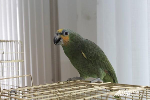 В центре Волгограда обосновались попугаи