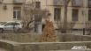В Волгоград пришла хмурая весна
