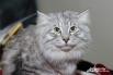 В Волгоград понаехали кошки из разных стран