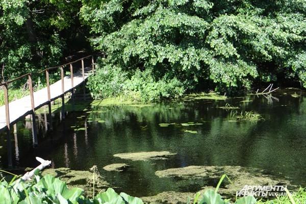 Вода в реке не имеет неприятного запаха, хотя растительности в ней хватает