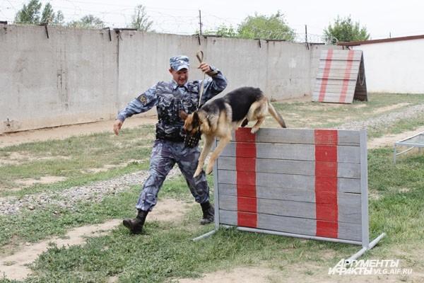 Новые выпускники взялись за «собачью работу»