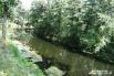 В реке водятся караси