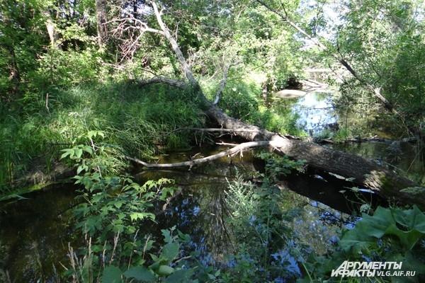На Арчеде строят свои плотины бобры