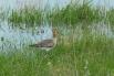 В пойме гнездятся многие редкие птицы
