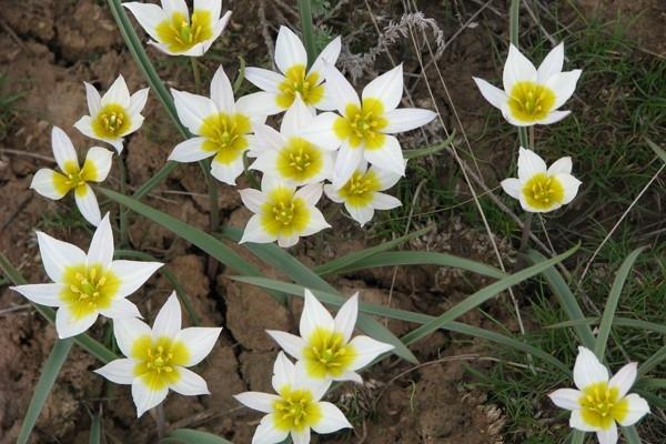 Цветы заменяют природе бижутерию