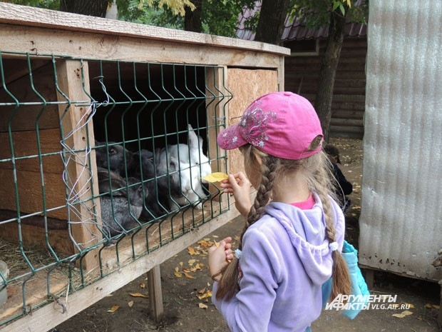Еду для животных можно принести с собой или купить в кассе зоодворика