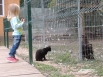 «Интересно, кто из нас обед». Дворовая кошка наблюдает за степным орлом в клетке