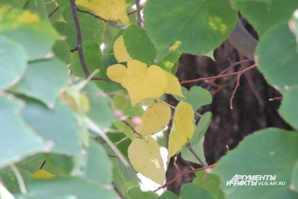 В Волгограде по-летнему тепло, и листва на деревьях только едва пожелтела