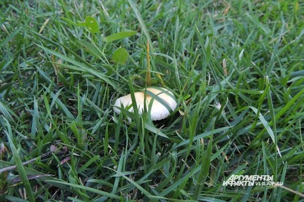 Осень – время собирать грибы и заготавливать ягоды