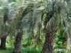 Буции в ботаническом саду
