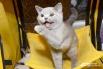 А этот кот, похоже, из Кировского района