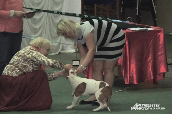 На выставке судья производит осмотр каждой собаки, делает ее описание и ставит оценку.