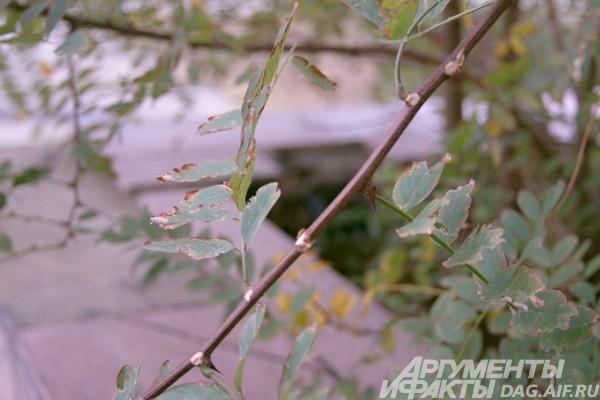 Листья надевают осенний наряд