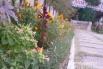 У цветов еще летняя пора