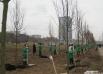 За время акции «Зеленый рекорд» за 44 дня в Казани было посажено 44 тыс деревьев