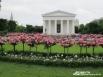 Розы рекой! Вена, Австрия.