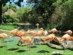 Фламинго. Так роскошно устроились в одном из старейших зоопарков Европы. Вена, Австрия