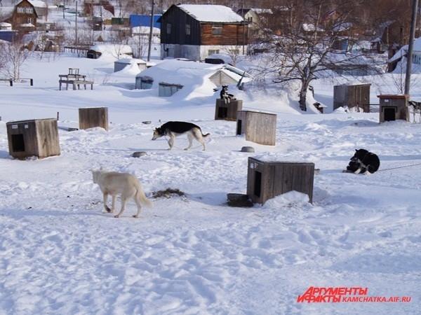 По всему периметру питомника расположились собачьи будки
