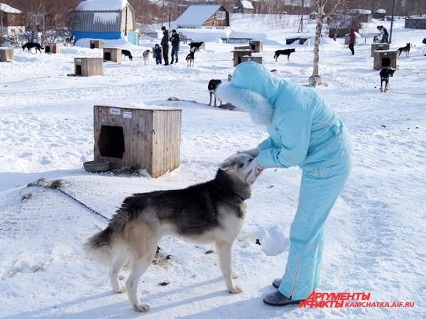 А большинство всё-таки отдавало предпочтение главным героям дня — собакам