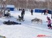 Под звонкий лай в питомник прибежала другая собачья упряжка