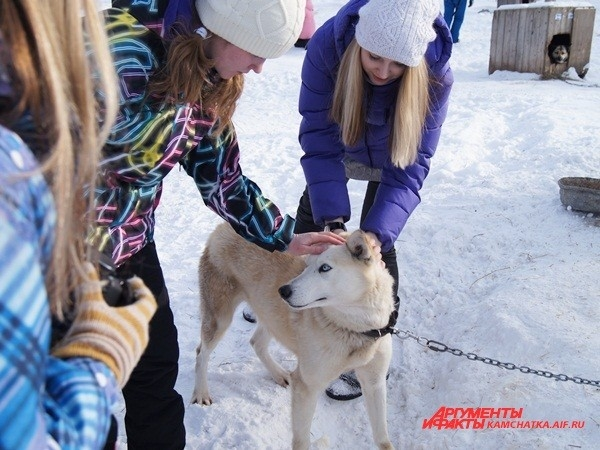 Собаки оказались очень дружелюбными