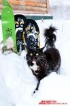 Кот, уважающий спорт!