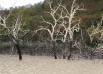 «Паводок» в Долине