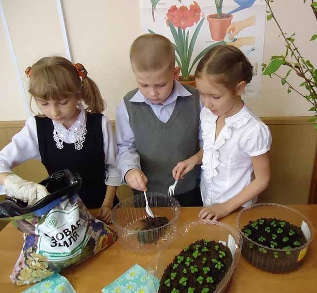 Ученики 1А высаживают семена цветов для городских клумб
