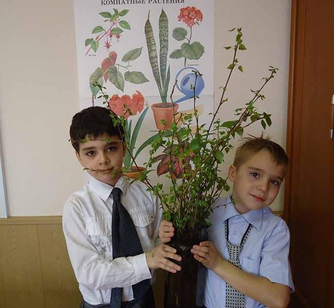 Артём и Саша вырастили из веток 9 саженцев деревьев