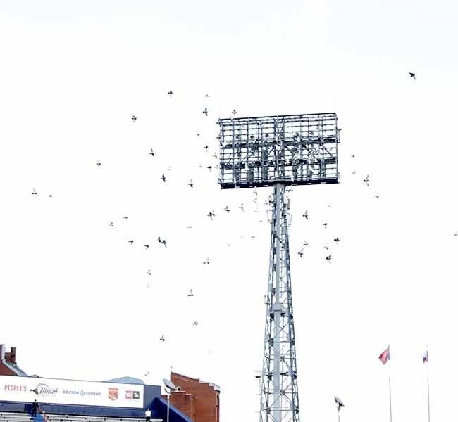 В небо над кемеровским стадионом взмыли белоснежные голуби