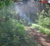 Сосновый бор в Кемерове