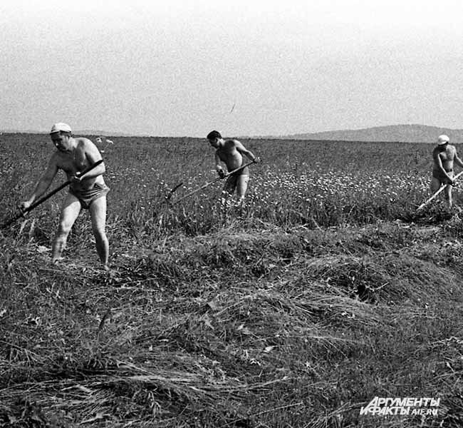1968 г. Село Тальжино. Косовица трав