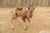 В Краснодарском «Сафари-парке» майский беби-бум