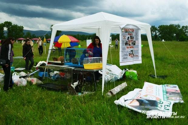Организация «Хвостики» предлагала красноярцам обзавестись питомцами с хвостиками