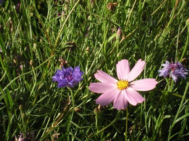 В траве притаились цветные всполохи
