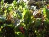 Последние грядки ожидают сбора урожая