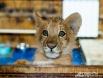 В Новосибирском зоопарке родился лилигренок, которого назвали Киарой.