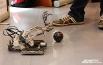 Здесь были не только лекции, но и практика: все желающие могли собрать собственными руками робота