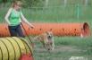 До начала соревнований хендлерам (владельцам питомцев) предлагалась пробная короткая пробежка по полосе препятствий.