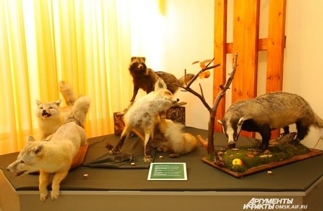 Выставочный зал представлен 16 комплексами: «Древнее оружие и снаряжение», «Огнестрельное оружие», «Мелкие хищники», «Пернатая дичь», «Норные звери», «Чёрная дичь», «Крупные охотничье-промысловые хищники», «Мелкие охотничье-промысловые», «Водоплавающие пт