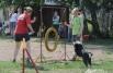 Хэндлер обычно бежит рядом с собакой, направляя её голосовыми командами и жестами (положением рук, плеч и ног).