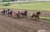 Приз некоммерческого партнерства «Содружество рысистого коневодства России» среди лошадей-четырехлеток на дистанции 2,4 тыс. м получил рысак Асс Чип из КФХ Виктора Виничука.