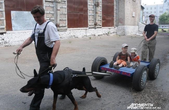 Зрители могли не только посидеть на газоне и посмотреть на собак, но и прокатиться на одной из них.