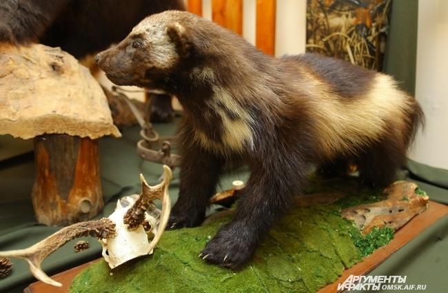 Потом целью такой охоты стала добыча выдающихся особей диких животных.