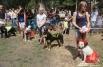 В мероприятия поучаствовали всё же не только беспородные собаки, но и породистые. Однако первым жюри всякий раз в конкурсах старалось отдать предпочтение.