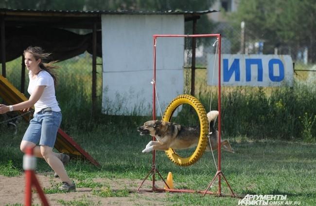 Учитываются скорость  и точность прохождения препятствий, особенно в соревнованиях более высокого уровня.
