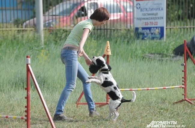 Высокая температура не стала помехой для четвероногих друзей: собачки были активны и веселы.