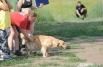 Аджилити для России относительно новый вид спорта с собакой, который был изобретен в Англии в конце 70-х годов.
