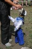 Хозяева собак выдумали самые невероятные костюмы. В номинации «Собака в костюме» безоговорочным фаворитом был Экс в костюме моряка.